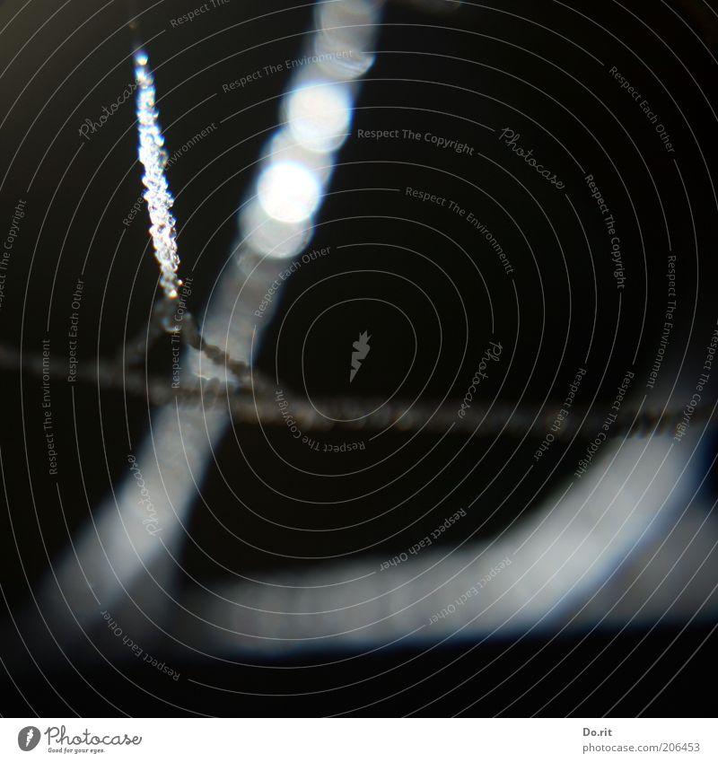 Trauerflor Natur Wasser schwarz dunkel Umwelt Wassertropfen Tropfen außergewöhnlich leuchten Tau Nachtaufnahme Schwarzweißfoto Synthese Spinngewebe
