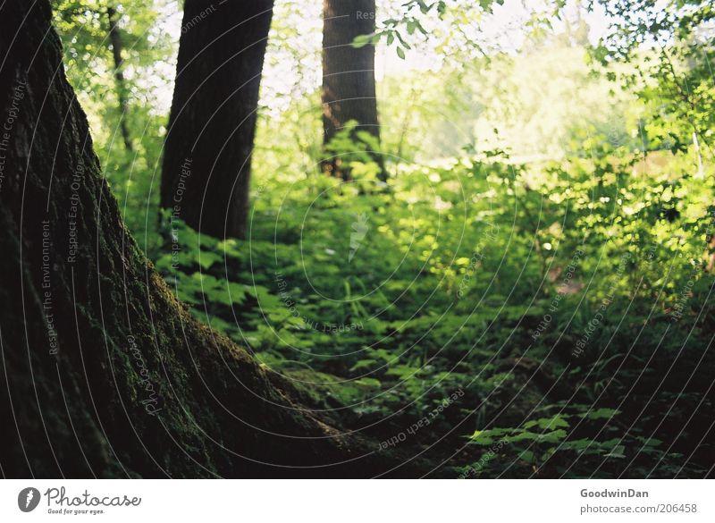 Analoge Magie Natur schön Baum grün Pflanze Wald Gefühle Luft Stimmung braun Wetter Umwelt frei Erde Sträucher nah