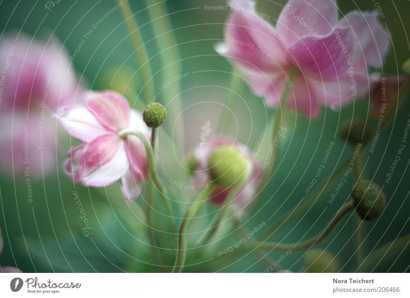 Leben. Natur schön Blume grün Pflanze Sommer Farbe Leben Gefühle Blüte Frühling Stimmung rosa Umwelt ästhetisch Wachstum