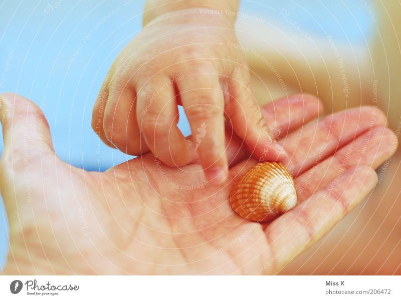 Strandbesuch mit Schatz Kind Hand Ferien & Urlaub & Reisen Spielen klein Finger Geschenk Freizeit & Hobby Kindheit Kleinkind Muschel Tier greifen Sommerurlaub