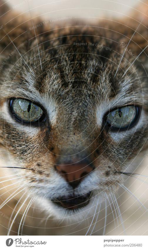 hmm... Tier Haustier Katze 1 schön Neugier weich braun Katzenauge Blick Farbfoto Außenaufnahme Menschenleer Tag Unschärfe Zentralperspektive Tierporträt