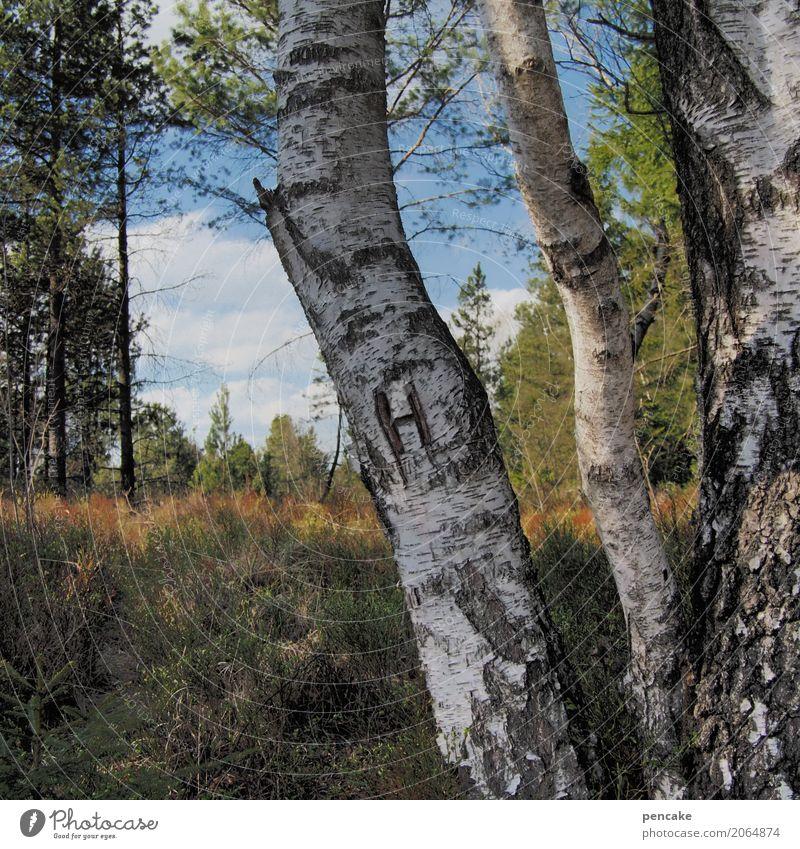 pour l'homme Natur Landschaft Himmel Schönes Wetter Baum Wald Stimmung Birkenwald Waldlichtung Furche Romantik Herrentoilette Farbfoto Außenaufnahme