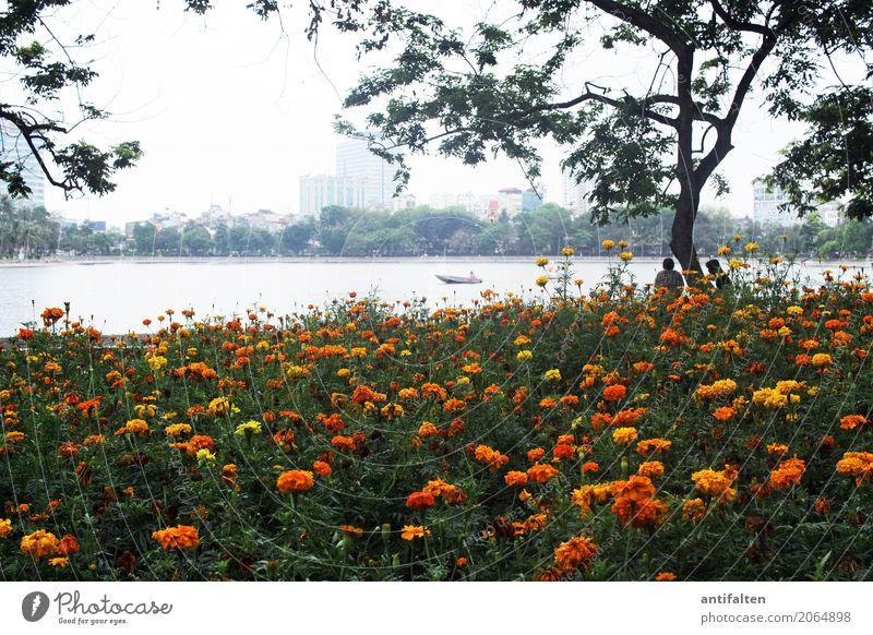 West Lake Mensch Natur Ferien & Urlaub & Reisen Pflanze Sommer Blume Blatt Ferne Lifestyle Blüte Frühling Garten Tourismus Freizeit & Hobby Park Ausflug