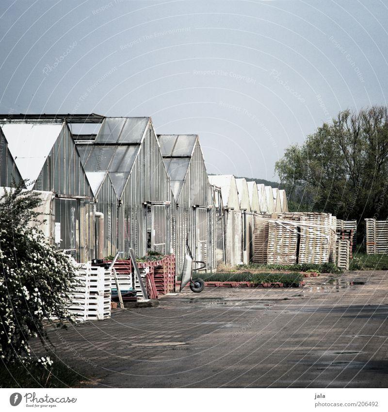 gärtnerei Himmel Baum Pflanze ruhig Gebäude Umwelt Platz Bauwerk Unternehmen Stapel Arbeitsplatz Gewächshaus Paletten Gärtnerei Schubkarre Glasdach