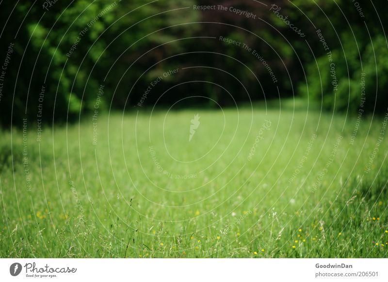 Weitsicht Natur schön grün Wiese Gras Park Umwelt frei Erde authentisch Urelemente Schönes Wetter Waldlichtung ursprünglich