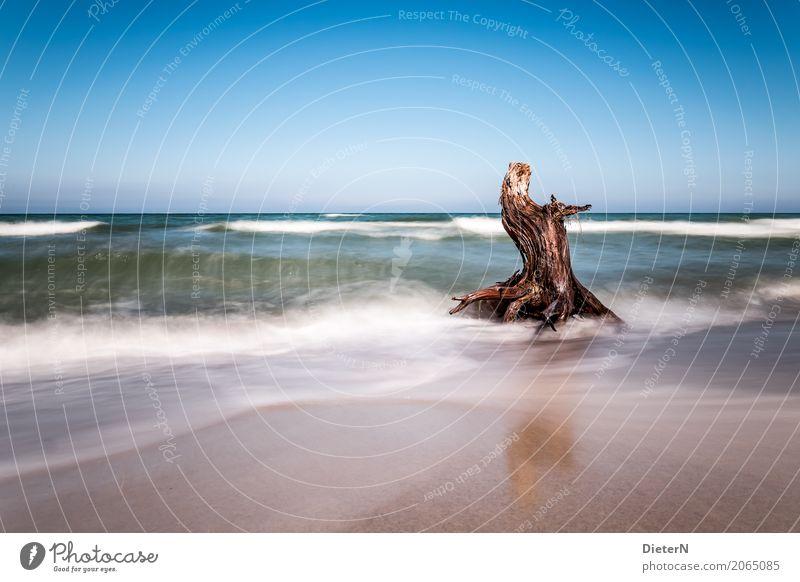 Holz Landschaft Wasser Himmel Wolkenloser Himmel Horizont Sommer Baum Küste Ostsee Meer blau braun grün weiß Darß Mecklenburg-Vorpommern Totholz Wellen Gischt