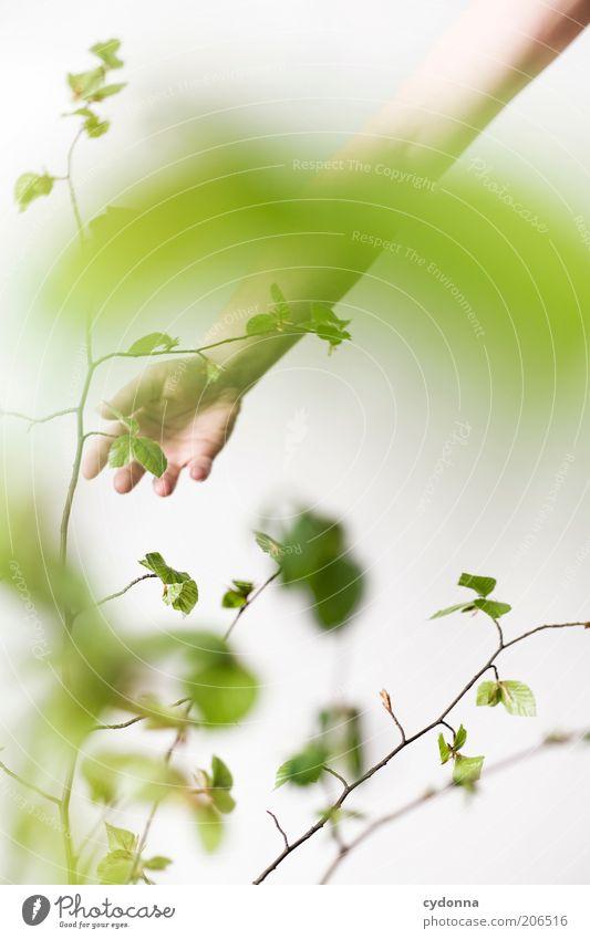 Natur zum anfassen Mensch Hand schön Pflanze Blatt ruhig Erholung Leben Frühling träumen elegant Arme ästhetisch Lifestyle einzigartig