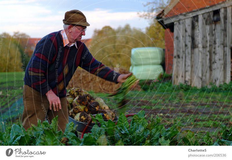 Rübenbauer Rübenfeld Zuckerrübe Schubkarre Silage Scheune Landwirtschaft Großvater 1 Mensch 60 und älter Senior Umwelt Pflanze Nutzpflanze Feld Mütze weißhaarig