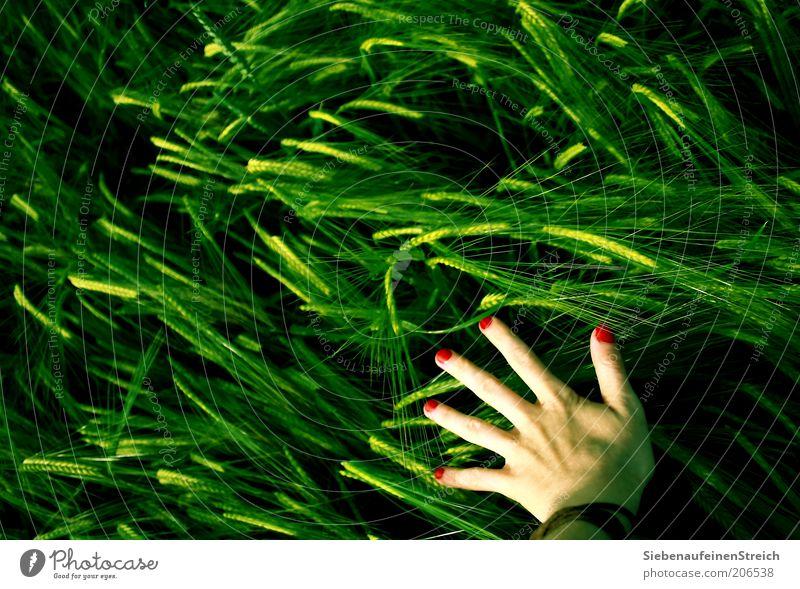 Hexe des Westens. Mensch Natur Hand Jugendliche grün rot Sommer Leben feminin Bewegung Feld gehen modern ästhetisch Wachstum