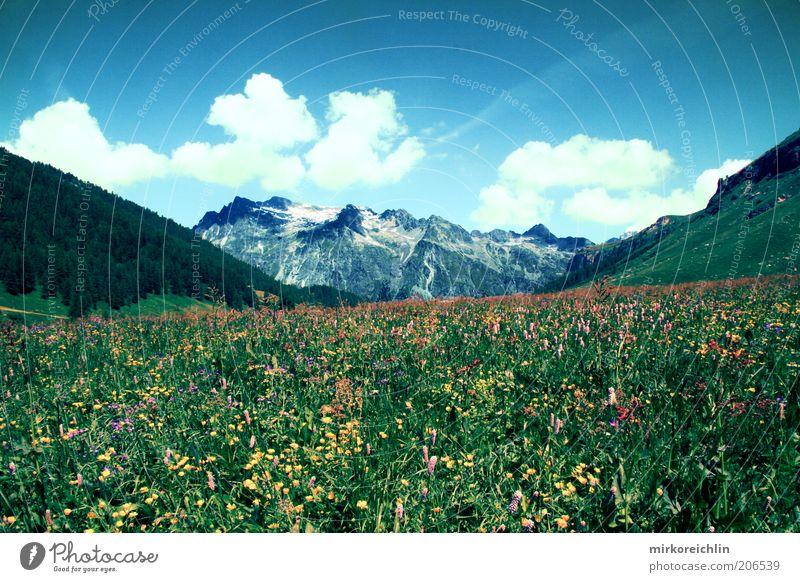 Swiss Mountain Umwelt Natur Landschaft Pflanze Luft Himmel Wolken Frühling Sommer Wetter Schönes Wetter Blume Gras Wiese Wald Hügel Alpen Berge u. Gebirge