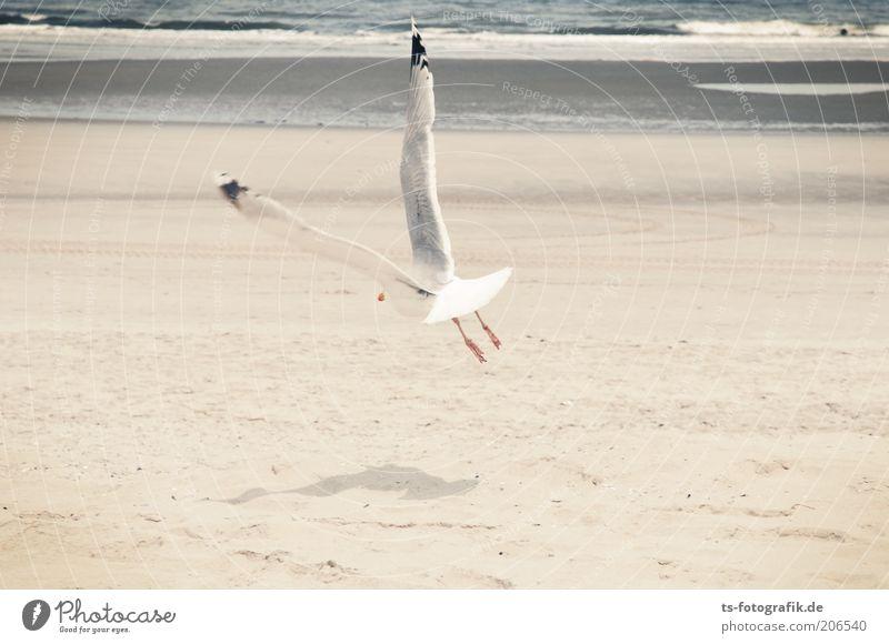 V-Flügler Wasser Meer Sommer Strand Ferien & Urlaub & Reisen Tier Bewegung Freiheit Vogel Wellen fliegen frei Insel Flügel natürlich Dynamik