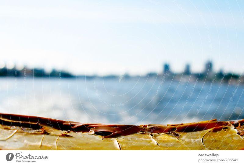 farewell Sommer Ferien & Urlaub & Reisen Hamburg Wärme Wasserfahrzeug Ausflug Fluss Hafen Abschied Schifffahrt Elbe Starke Tiefenschärfe Sightseeing Fähre Heimweh wegfahren