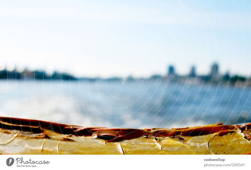 farewell Sommer Ferien & Urlaub & Reisen Hamburg Wärme Wasserfahrzeug Ausflug Fluss Hafen Abschied Schifffahrt Elbe Starke Tiefenschärfe Sightseeing Fähre