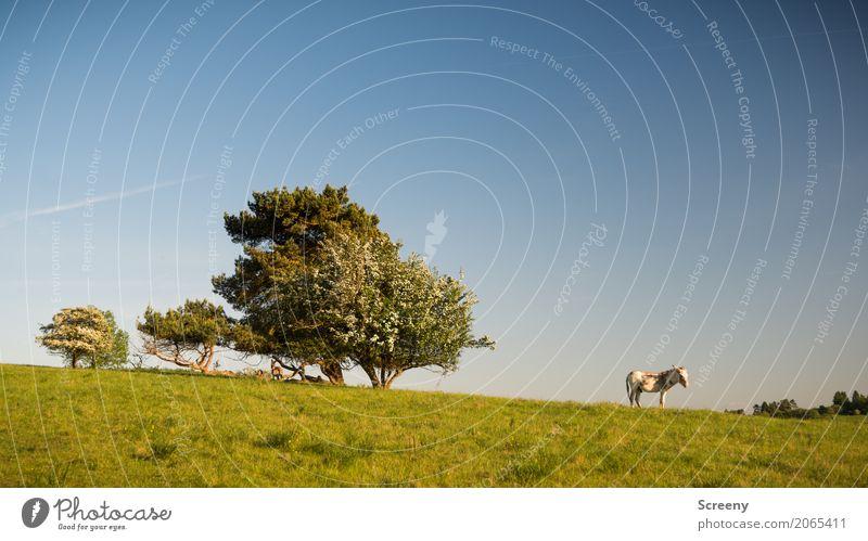 Der Weitblicker Himmel Natur Ferien & Urlaub & Reisen Pflanze Sommer Baum Landschaft Tier ruhig Frühling Wiese Gras Tourismus Ausflug wandern stehen