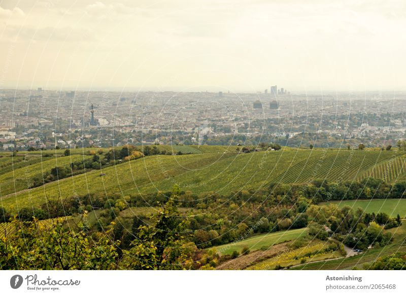 grüne Stadt? Umwelt Natur Landschaft Pflanze Himmel Wolken Horizont Wetter Baum Gras Sträucher Hügel Wien Österreich Hauptstadt Stadtrand Haus Hochhaus Turm