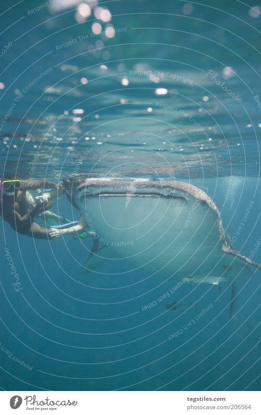 * !!! * Mann Wasser Ferien & Urlaub & Reisen Meer Freiheit Schwimmen & Baden Angst Freizeit & Hobby groß Abenteuer Fisch tauchen Haifisch entdecken Mut Wasseroberfläche