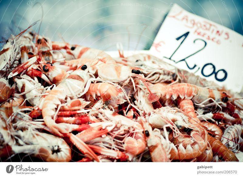 Lagostins - heute nur 12 € Ernährung Lebensmittel frisch Appetit & Hunger Haufen Schere Auswahl Delikatesse Meeresfrüchte Fischmarkt Protein Garnelen Hummer
