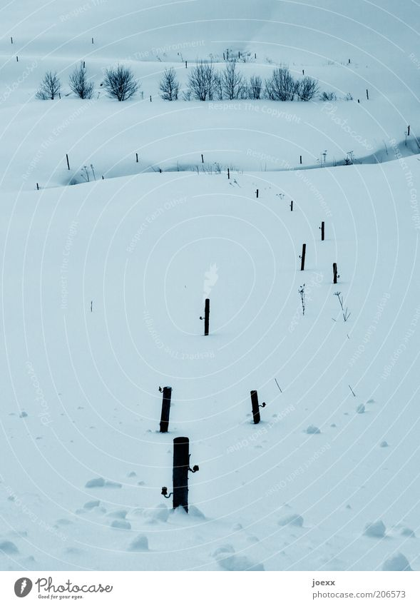 Kalt Natur Landschaft Winter Schnee Feld kalt natürlich ruhig Einsamkeit Idylle Schneelandschaft Pfosten Farbfoto Gedeckte Farben Außenaufnahme Tag