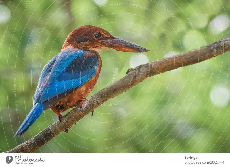 Geschafft... Danke Screeny Natur Pflanze blau schön weiß Baum rot Tier Küste See braun Vogel fliegen Wildtier Flügel Fluss