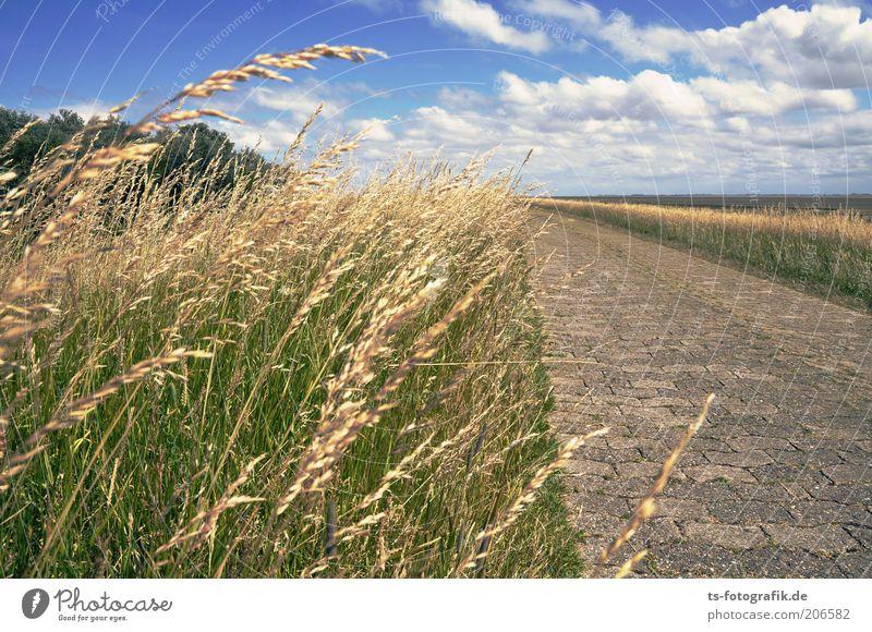 Ninja-Gräser greifen an Natur Himmel Pflanze Sommer Ferien & Urlaub & Reisen Wolken Gras Wege & Pfade Wärme Landschaft Küste Horizont Ausflug Insel Tourismus