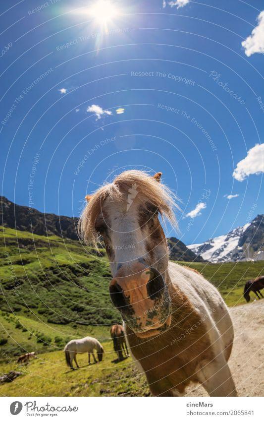 Pferdeportrait in Alpenlandschaft Sommer Berge u. Gebirge wandern Pflanze Himmel Schönes Wetter Tier Wildtier Tiergruppe beobachten entdecken Blick ästhetisch