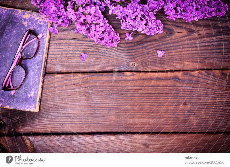 Lila Flieder und ein altes Buch mit Brille Blume Blüte Papier Holz oben retro braun violett Deckung Fliederbusch Hintergrund altehrwürdig purpur Wissen