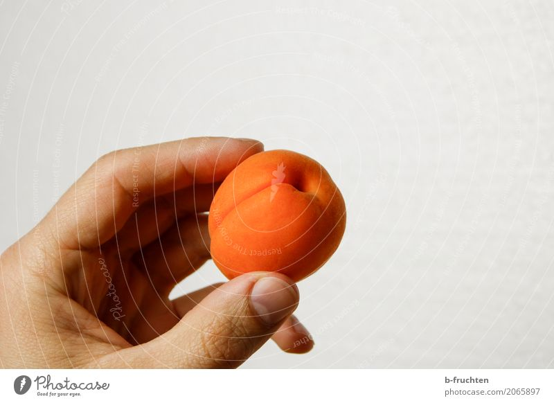 Aprikose Frucht maskulin Hand Finger 30-45 Jahre Erwachsene Essen frisch Gesundheit natürlich orange genießen marille festhalten reif fruchtig Süßwaren süß