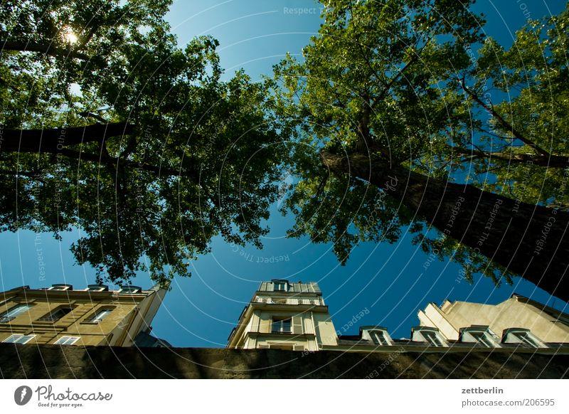 Seineufer Paris Frankreich Mole Haus Fassade Vorderseite Fensterfront Himmel Schönes Wetter Wolkenloser Himmel Baum Froschperspektive Baumstamm Perspektive