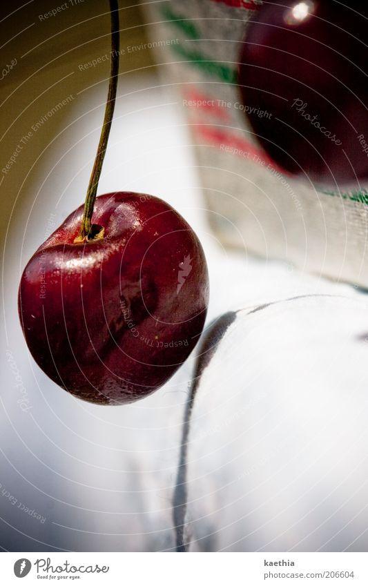Purzelbaum rot Ernährung Lebensmittel Frucht frisch Stengel reif hängen Kirsche Vegetarische Ernährung Gesunde Ernährung Rohkost Vegane Ernährung