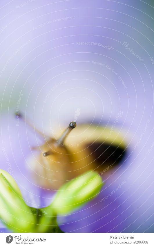 AugenBlick [2] Natur Pflanze ruhig Auge Tier Umwelt beobachten Wildtier Schnecke Fühler Makroaufnahme