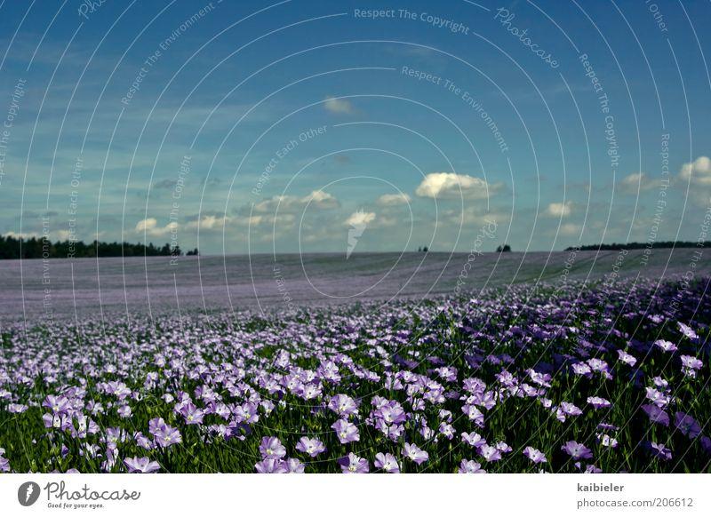 Blütenmeer Natur schön Himmel Blume blau Pflanze Sommer Wolken Ferne Freiheit Landschaft Feld Umwelt Horizont violett
