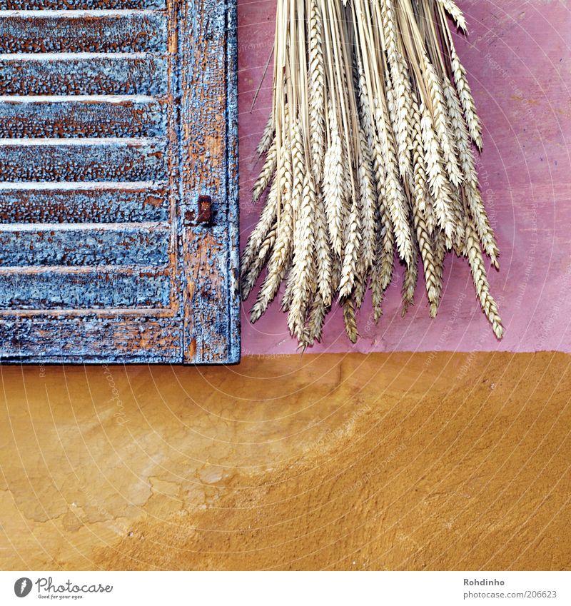 Kernig & Kornig Stil Design harmonisch Sommer Dekoration & Verzierung Pflanze Nutzpflanze Weizen Ähren Mauer Wand blau braun mehrfarbig gelb gold violett rosa