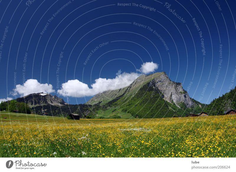 Blumenwiese Natur blau Pflanze Sommer Ferien & Urlaub & Reisen Wolken Wiese Berge u. Gebirge Landschaft Umwelt Klima Schönes Wetter Österreich Bregenzerwald