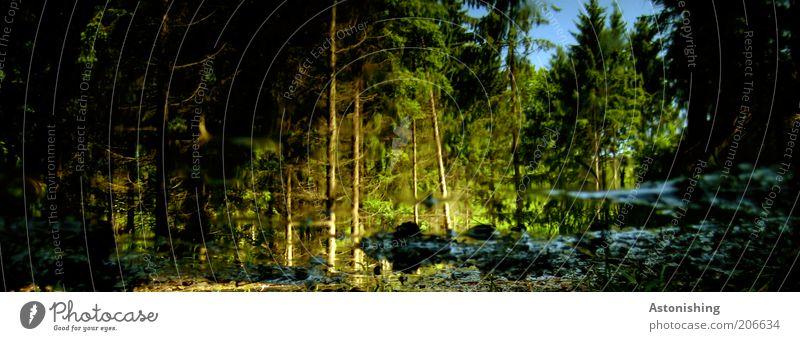 Wald Umwelt Natur Landschaft Pflanze Wasser Sonnenlicht Sommer Klima Wetter Schönes Wetter Baum kalt nass blau braun grün schwarz Pfütze Reflexion & Spiegelung