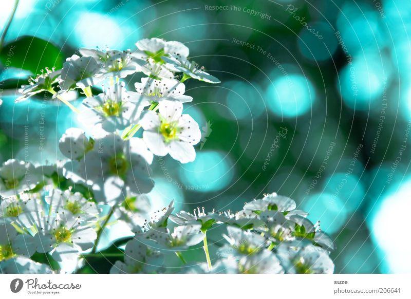 Blinker Duft Umwelt Natur Pflanze Frühling Blüte Blühend Wachstum frisch hell natürlich blau Stimmung Frühlingsgefühle Lichtpunkt Farbfoto mehrfarbig