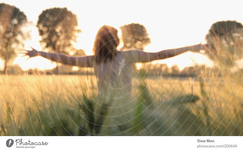 touched by the sun... Frau Natur Pflanze feminin Herbst nackt Feld Arme Rücken natürlich genießen Kornfeld Oktober Unbeschwertheit Getreidefeld ausbreiten