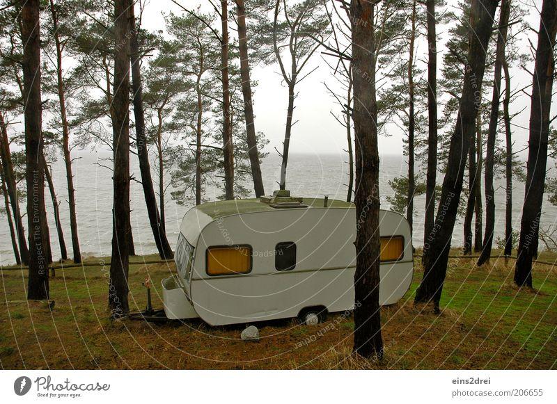 Waldcamper Natur Wasser Himmel Baum Meer Pflanze Ferien & Urlaub & Reisen Einsamkeit Ferne Herbst Gras Freiheit Landschaft Raum