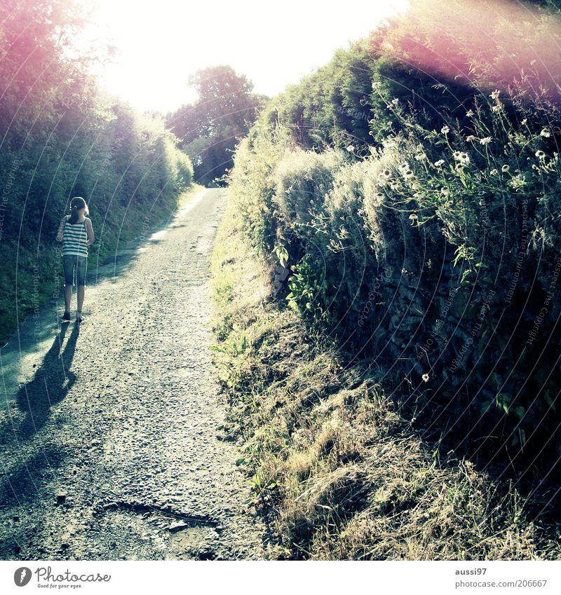 Walton's Mountain Schotterweg Gegenlicht Fußweg Mädchen Jugendliche gehen Kind Sonne Schönes Wetter Sonnenstrahlen Natur Wege & Pfade grün Pflanze Sträucher