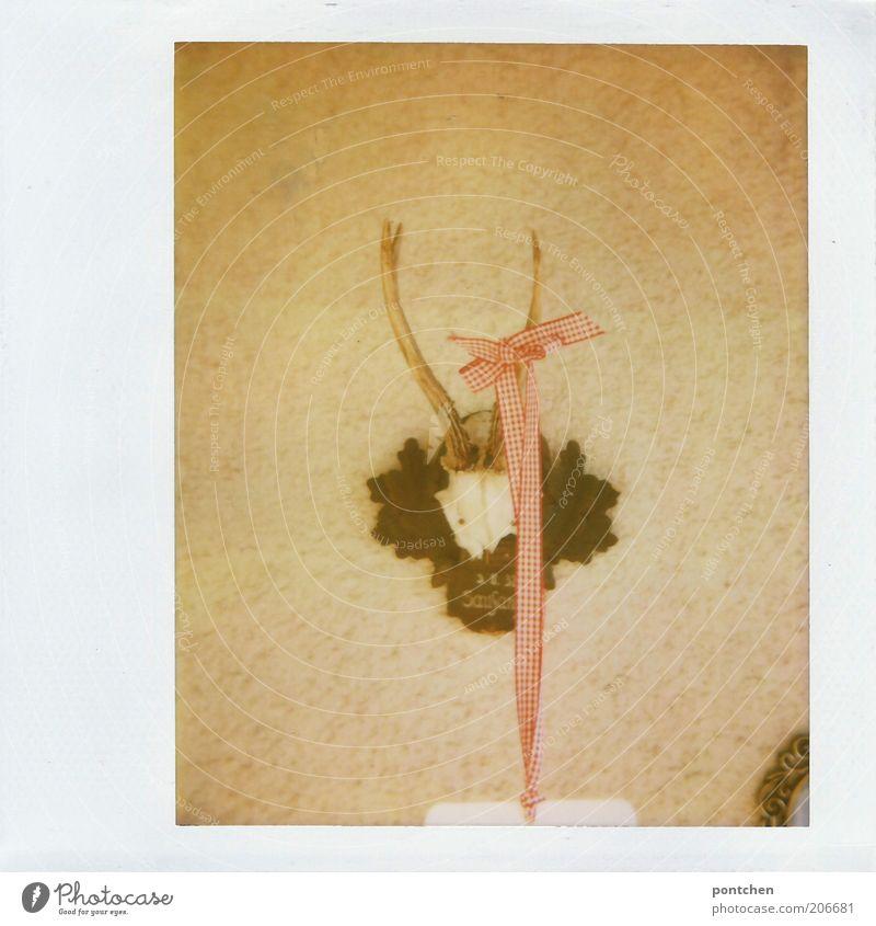 noch ein geweih Tier Wand Stil Tod authentisch Kitsch Dekoration & Verzierung historisch Horn Schleife Hirsche Skelett altmodisch Beute Polaroid