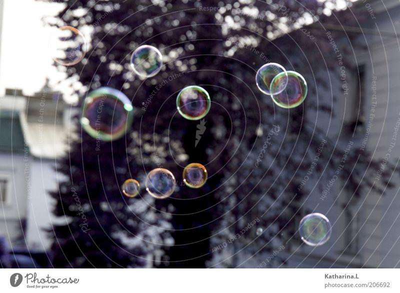 bubbles Kugel glänzend nass natürlich neu oben rund Seifenblase Außenaufnahme Menschenleer Tag Reflexion & Spiegelung Unschärfe Schweben Schwerelosigkeit