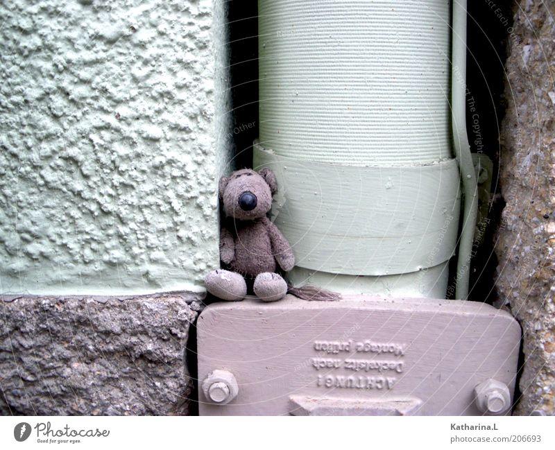 stofftier Mauer Wand Fassade Spielzeug Teddybär Stofftiere Dekoration & Verzierung Sammlerstück niedlich retro violett Farbfoto Gedeckte Farben Außenaufnahme