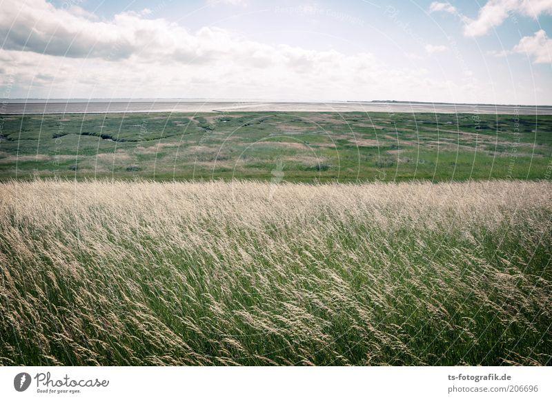 Gegen den Wind gebürstet Himmel weiß Meer grün Pflanze Sommer Strand Ferien & Urlaub & Reisen Wolken Ferne Wiese Gras Küste frei Horizont