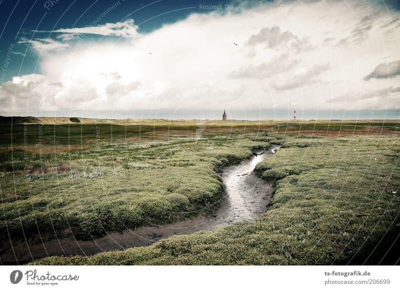 Das Ende der Reise Umwelt Natur Landschaft Pflanze Urelemente Wasser Himmel Wolken Gewitterwolken Wetter Schönes Wetter Wind Moos Grünpflanze Wiese Küste