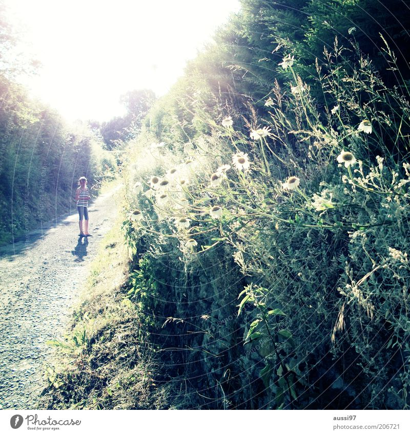 Little Miss aussi Kind Mädchen Sonne Sommer Erholung Wege & Pfade Ausflug Spaziergang Strahlung Fußweg Kräuter & Gewürze gehen sommerlich Kamille Ausflugsziel
