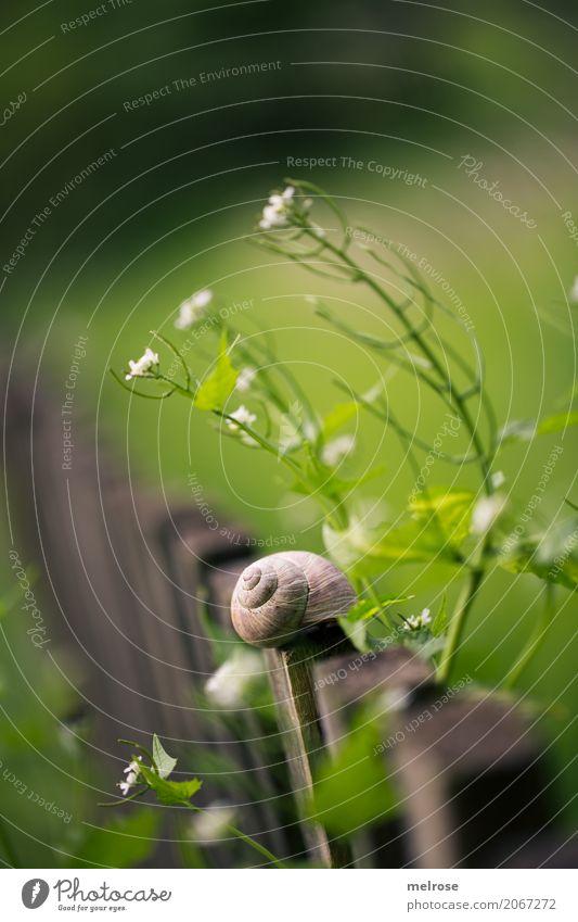 Schnecken-Townhouse Delikatesse Umwelt Natur Sonnenlicht Sommer Schönes Wetter Pflanze Gras Sträucher Blüte Wildpflanze Garten Tier Weichtier 1 Idylle