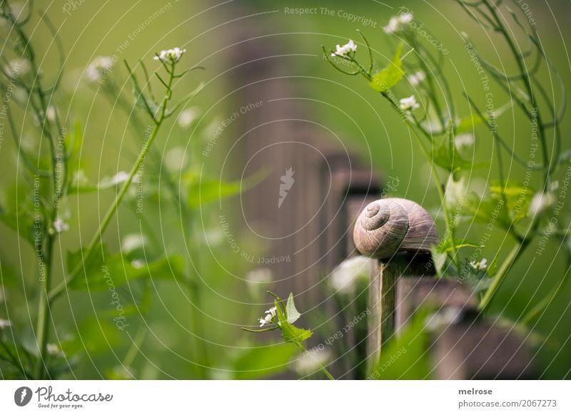 Hurra - idyllisches 800. !!! Stil Natur Sommer Schönes Wetter Pflanze Blume Gras Blatt Blüte Wildpflanze Blütenpflanze Blütenstiel Garten 1 Tier Gartenzaun Holz
