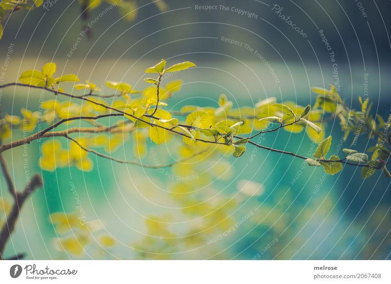 Blatt-GRÜN ... Ausflug Sommer Sommerurlaub Sonne Umwelt Natur Sonnenlicht Schönes Wetter Wärme Pflanze Baum Grünpflanze Wildpflanze Zweige u. Äste Blätter See