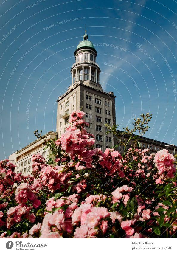 Berlin Frankfurter Tor schön Sommer Architektur Turm Rose Bauwerk Blühend Hauptstadt Blume Friedrichshain mehrfarbig Deutschland Klassizismus Karl-Marx-Allee