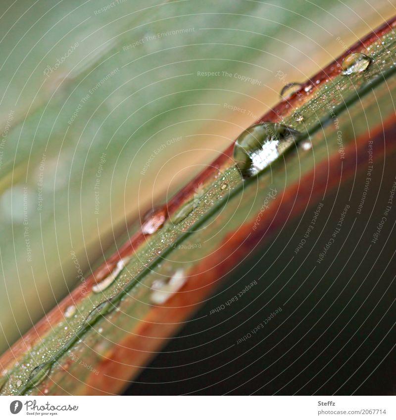 Regenstimmung Umwelt Natur Pflanze Wassertropfen Herbst Wetter Gras Wildpflanze Halm Garten Park Wiese frisch nass natürlich schön braun grün achtsam hydrophob