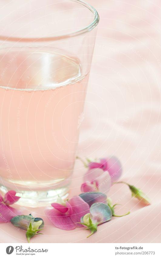 Rhabarbersaft auf Hawai Blume Sommer Farbe kalt Blüte Glas rosa Getränk trinken violett zart Flüssigkeit exotisch Erfrischung Durst Saft